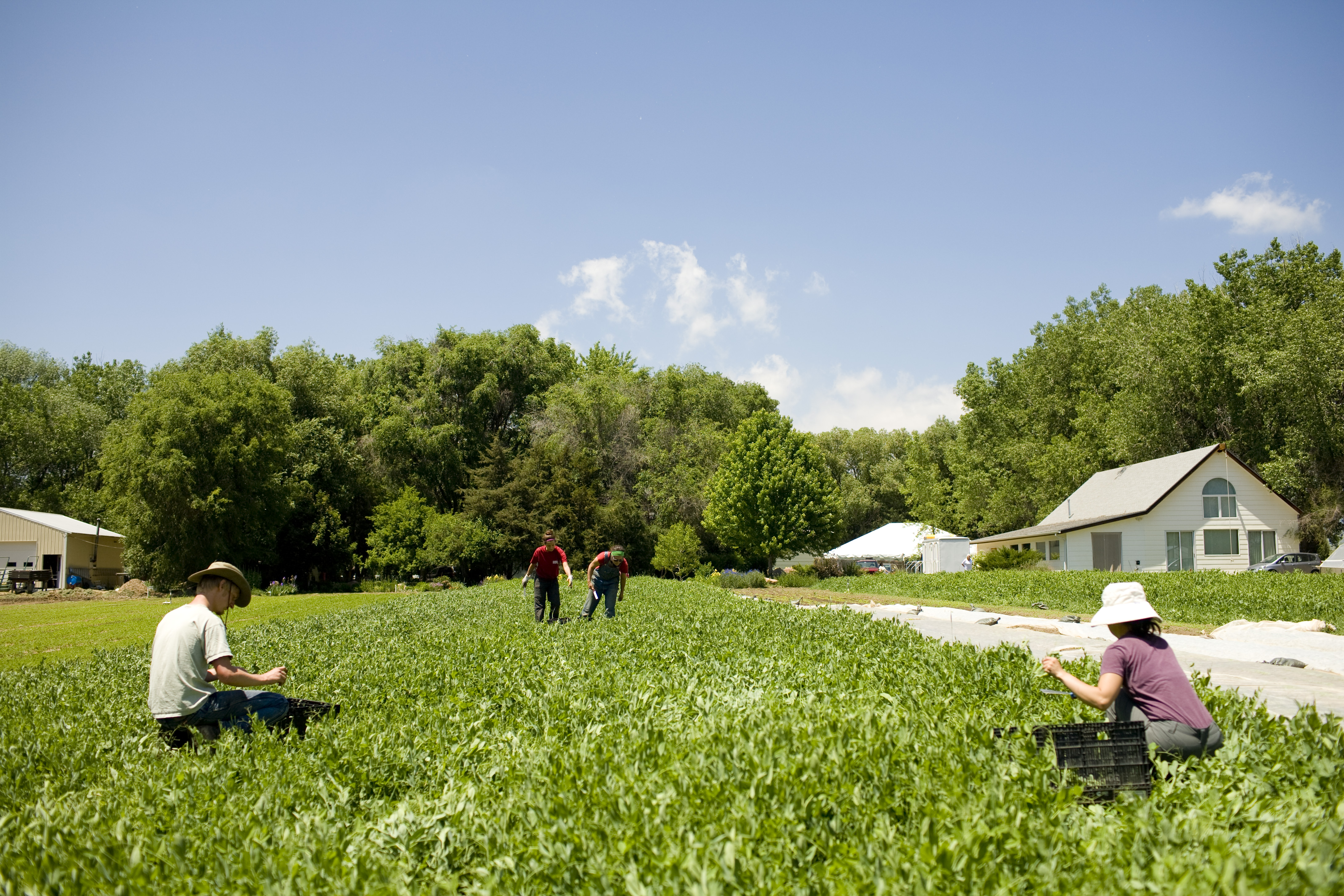 Wolfing Farming Organic For The Organic Farming