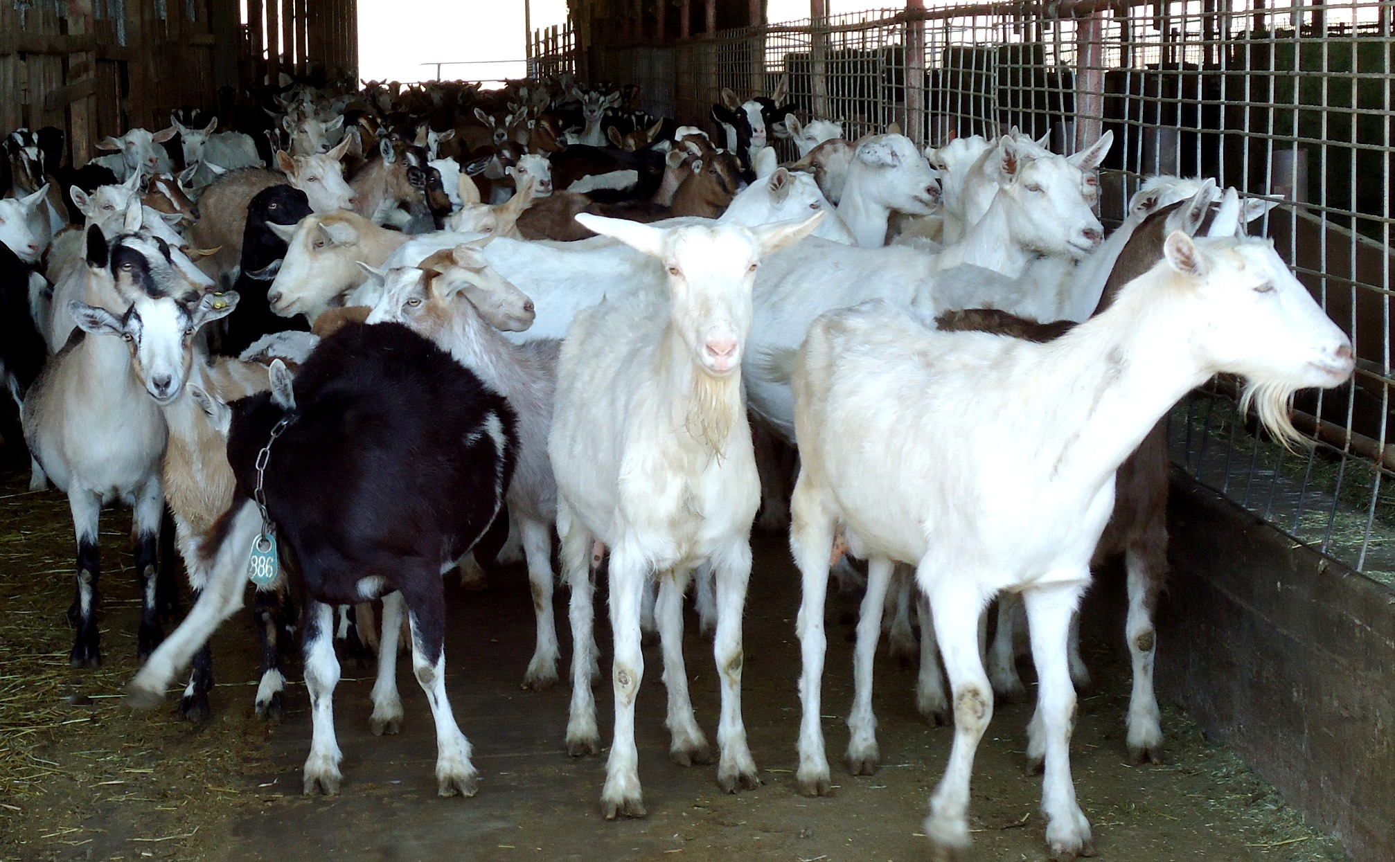 milk farming business plan