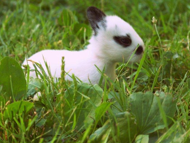 Broken New Zealand Baby Bunny