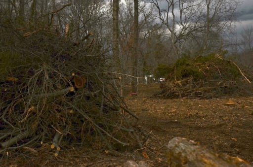 A tangled mass of heavy wood = brush pile.