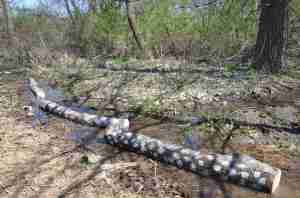Our directions say we should make sure the logs are watered at least once a week or so, glad we have access to water!