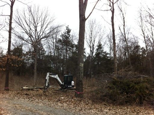 Armed with a chainsaw and a small excavator - the clearing commences.