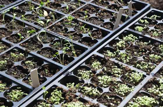 The flecks of seeds GREW!!